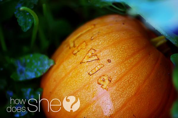 pumpkin scarring