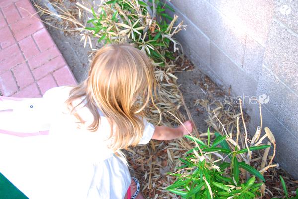 Ashley ordenando el patio trasero (21)