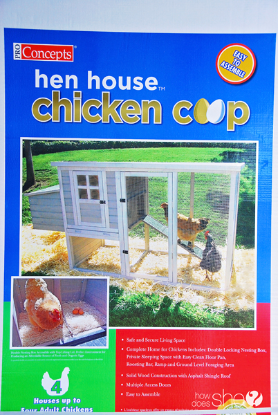 ashley chickens for beginners (17)