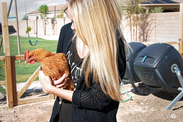 ashley chickens for beginners (5)
