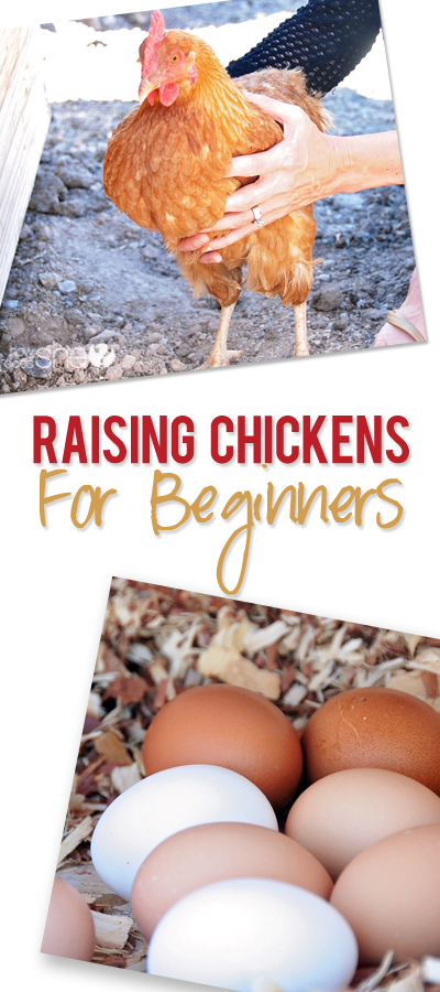 How to Raise Chickens for Beginners – Part One