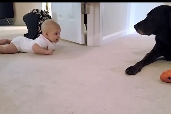 Baby's first crawl….the ending is so sweet!