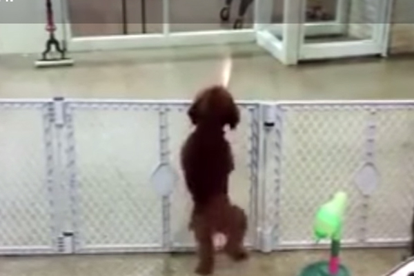 Watch how this dog dances when he sees his owner!