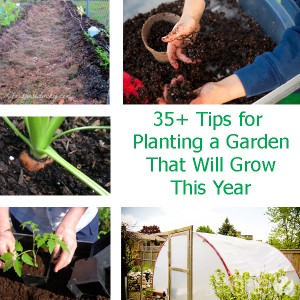 35+ Tips for Planting a Garden That Will Grow This Year