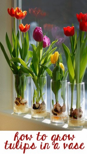 Decorate for spring on a budget