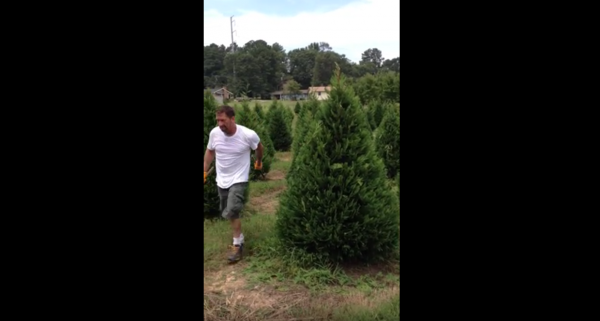 mad tree trimming skills