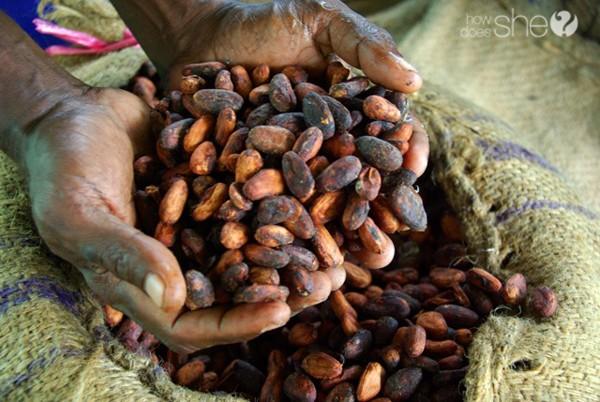 cocoa beans copy