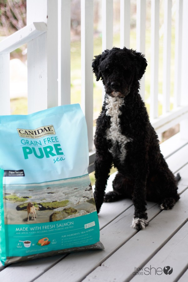 Canidae Dog food (7)