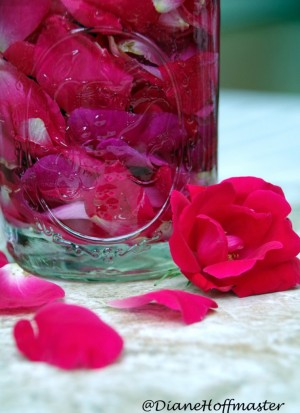 How-to-make-rose-water-743x1024