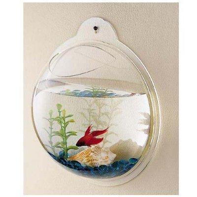 fish in a wall aquarium