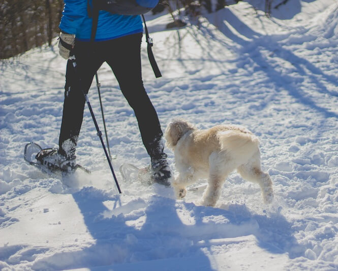 image of man snowshoeing with dog