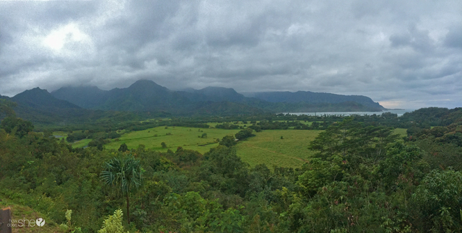 Lush greenery on Kauai