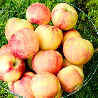 Caramel Apple Dip Recipe: Apples dipped in HEAVEN