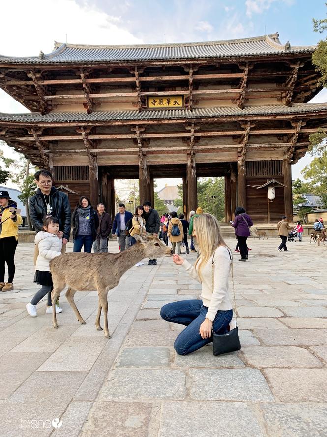 Japan Travel Nara