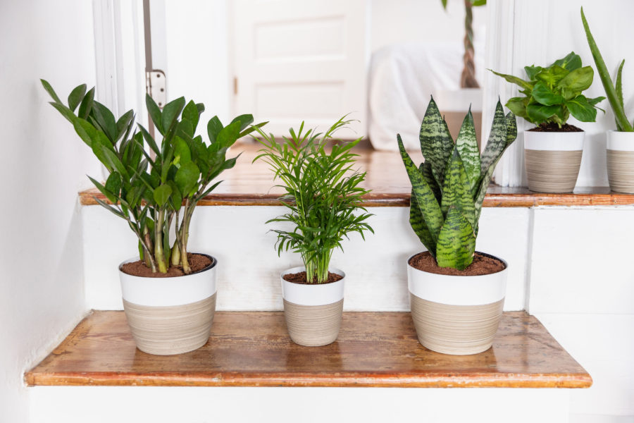 16 Insanely Rad Houseplants That Improve Your Health and Bring the Chic