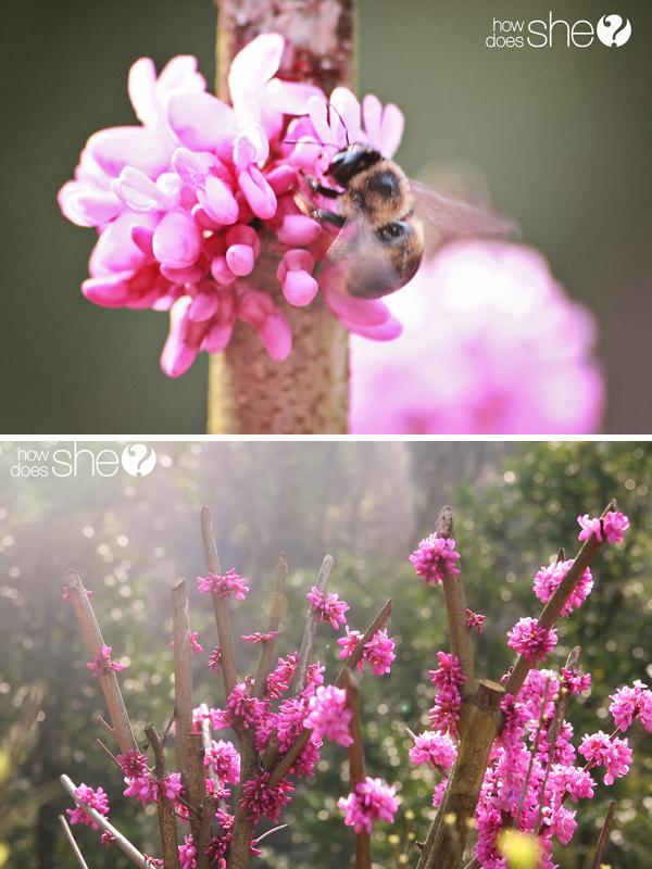 Bee pics copy