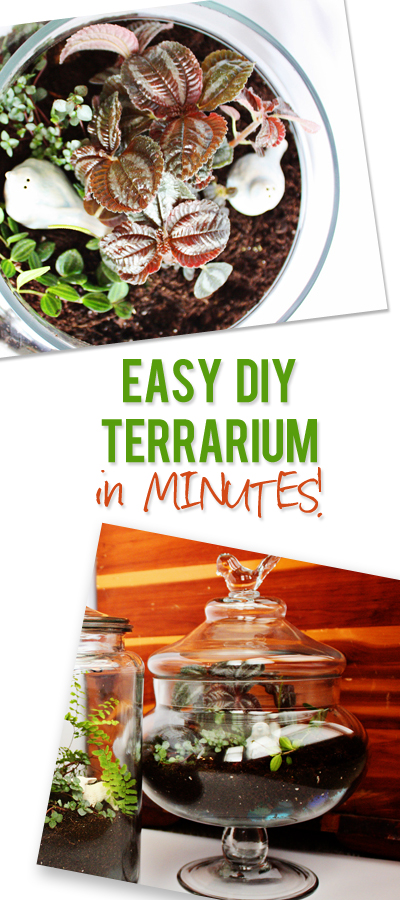 easy diy terrarium in minutes